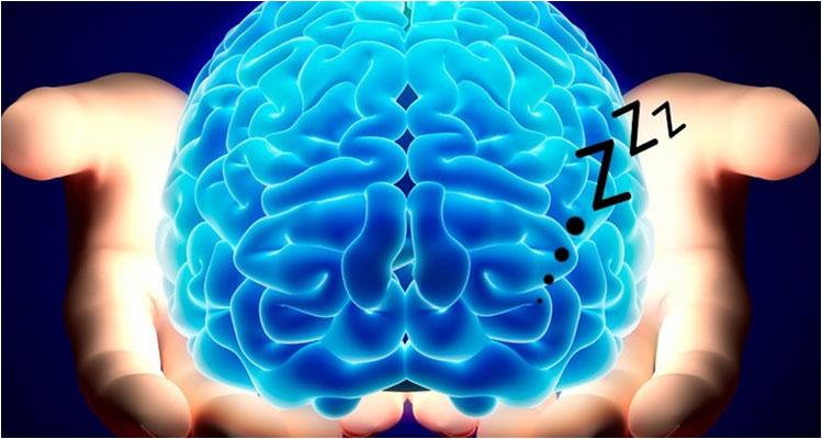 science-of-sleep-portland-tigard-lake-oswego-brain-biology-chemistry-understanding